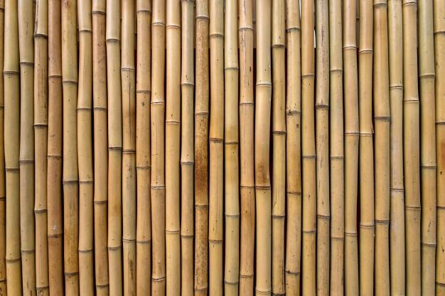 Pourquoi le bois de bambou est plus écologique que d'autres bois ?